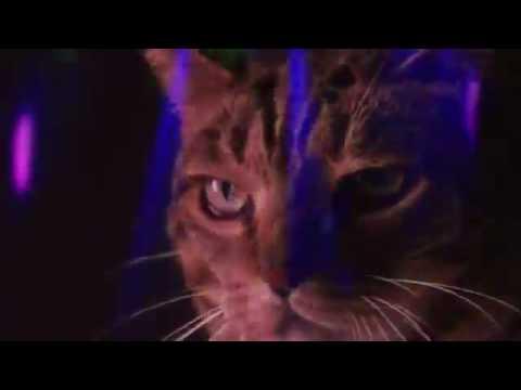 Смешные коты (8 видео) - FunKot