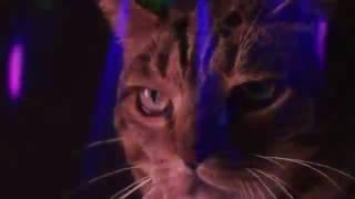 Коты поют очень смешное видео