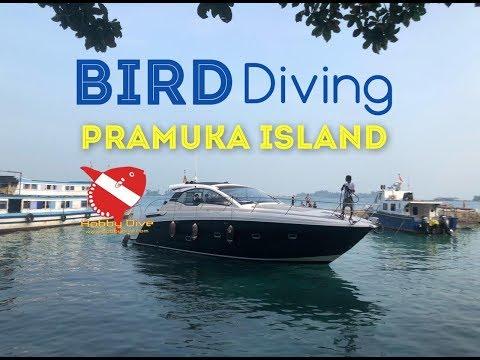 BIRD Dive Group @Pulau Pramuka with Hobby Dive