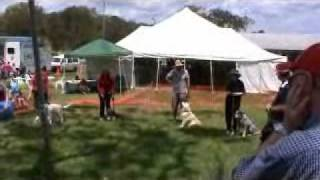 Dog Obedience Toowoomba Pet Expo 2010.part 2wmv.wmv