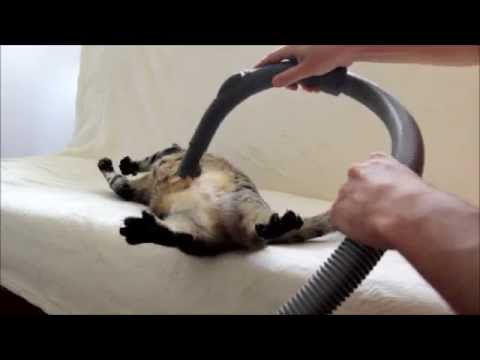 Cats Who Like Being Vacuumed