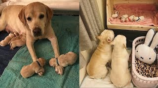 Animals Mothers - beautiful, happy and meaningful moment of animal family