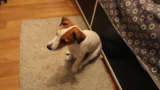 Как научить свою собаку команде суслик /