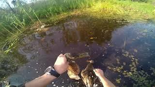 GoPro: Охота на уток 2017. Открытие осенней охоты 2017 в ХМАО/ Duck hunting 2017