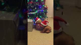 Baby funny video- My first Christmas.