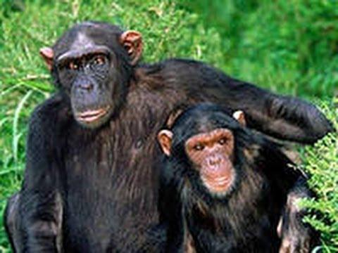Lustiger Affe Im Zoo Beschlossen Alle Erschrecken!)