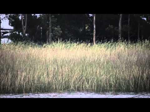 humedales del santa lucia bajo proteccion para mejorar el agua