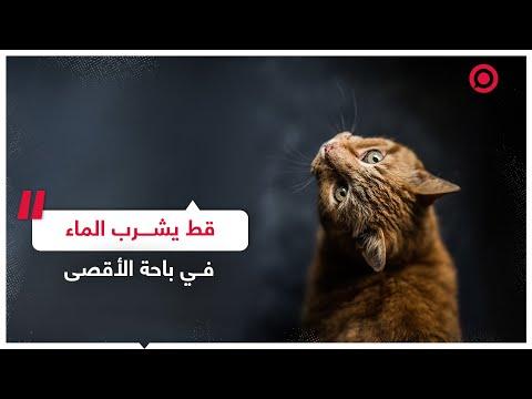 قط يشرب الماء في باحة المسجد الأقصى   RT Play