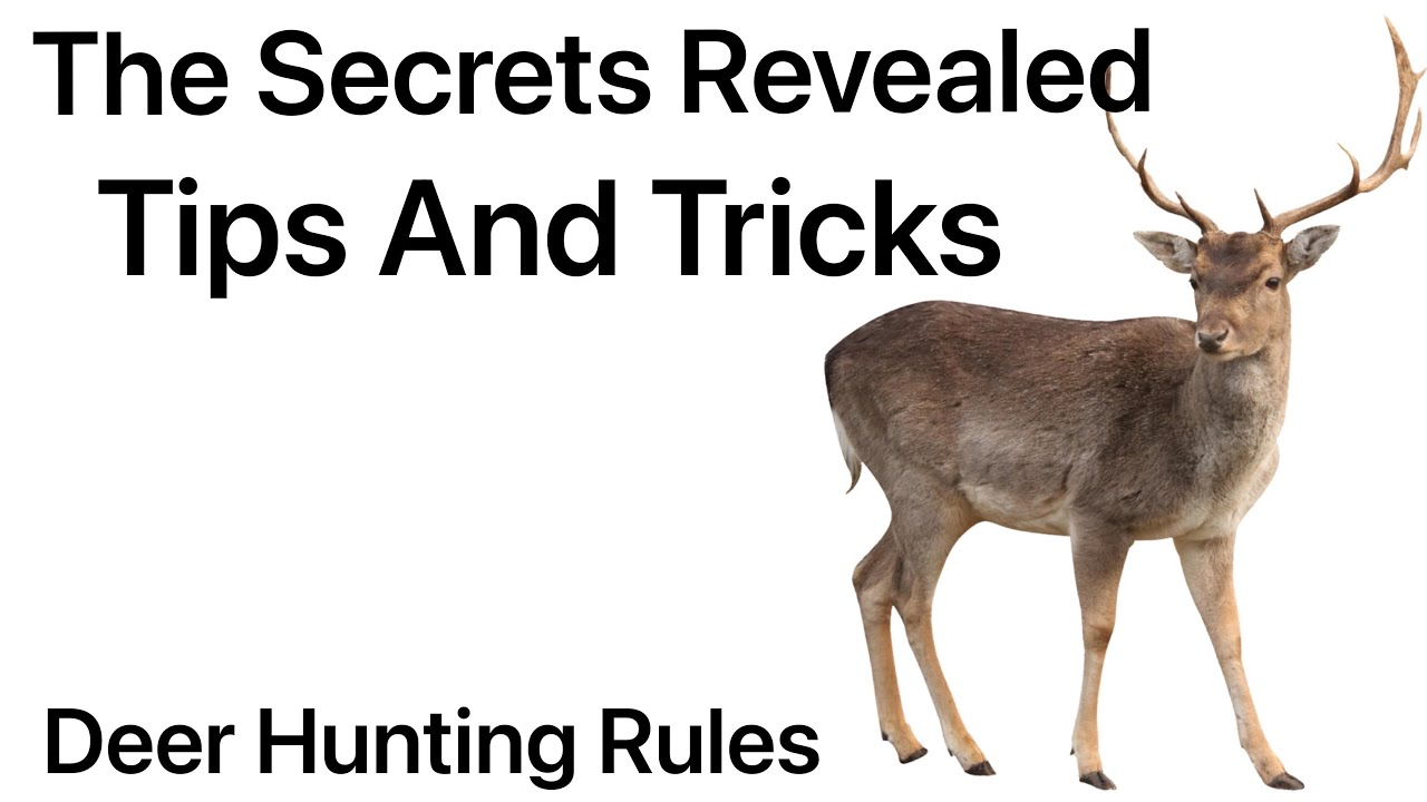 Follow The Guide And Improve Your Hunt By 33%