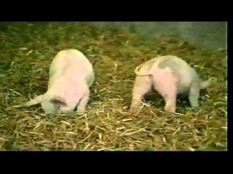 The Sad Truth About Factory Farming   -   Nancy Mroczek PhD