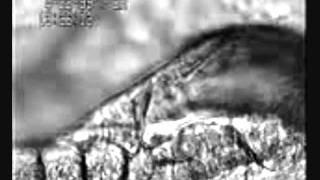 uso de albendazol en cabras de FES Cuautitlan
