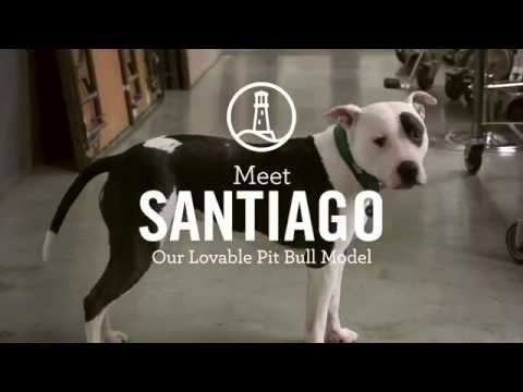 "Meet Santiago – A Lands' End ""Model"" And Rescue Dog"
