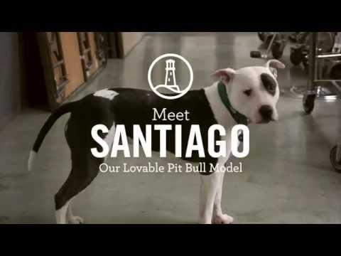 "Meet Santiago – A Lands' End ""Model"" And Rescue Dog"