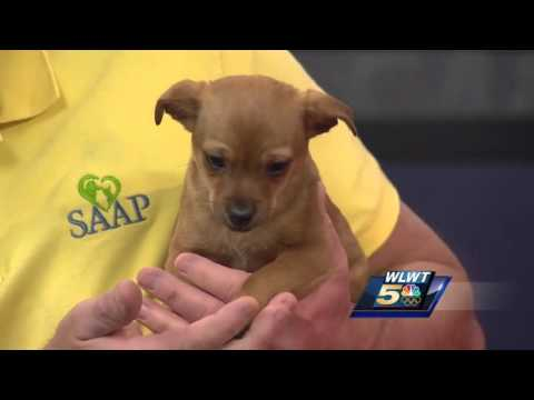 Zizzer The Chihuahua Yorkie Mix And Er Jack The Kitten Available For Adoption