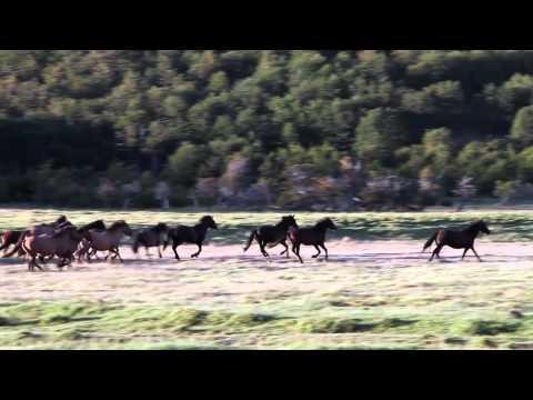 Patagonia Wild Horse Tracking - EcoCamp Extension