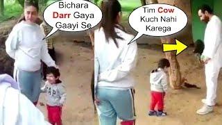 Taimur Ali Khan Run Towards Kareena Kapoor After Getting SCARED Of Cow