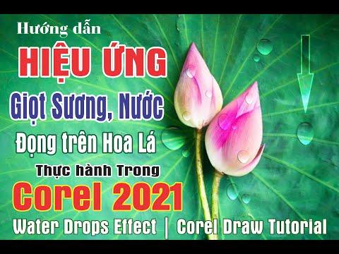 Hướng Dẫn Làm Hiệu Ứng Giọt Nước Sương Đọng Trên Hoa Lá Trong Corel 2021 | Corel Draw Tutorial | Tip