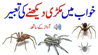 Video Khawab Ki Tabeer In Urdu/Hindi Khawab Mein Spider Dekhna Khawab Mein Makri Dekhna Makri Ka Jala download MP3, 3GP, MP4, WEBM, AVI, FLV April 2018
