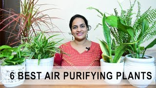 6 Best Indoor Air purification Plants in India | Gardening Info & Care
