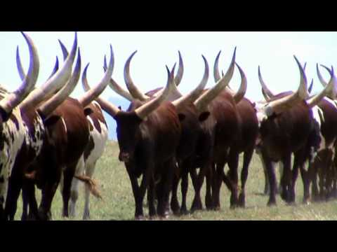 THE INCREDIBLE ANKOLE.mpg