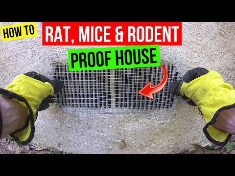 How To Protect your Home from Rats, Mice & Rodents -Jonny DIY