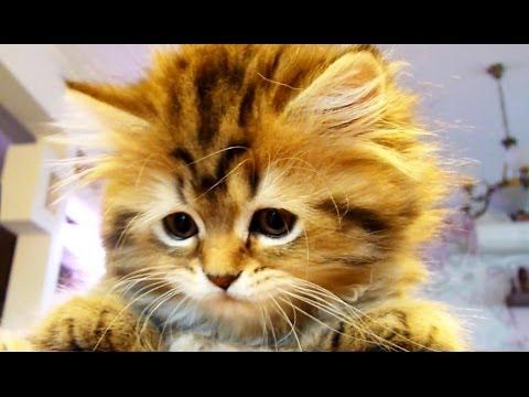 Funny Kittens vs. Dancing Tail