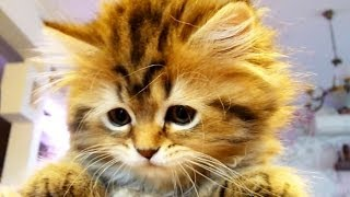 Too Cute : Funny Kittens vs. Dancing Tail