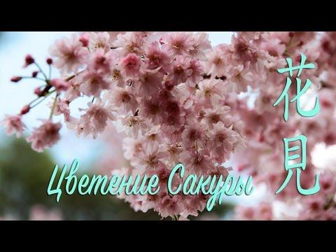 Видео Буддизм вегетарианство диета милосердия