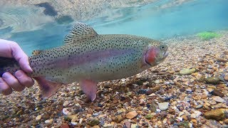 TROUT Fishing in ULTRA CLEAR Water Creek