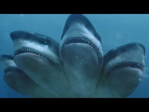 【大白话】大海里鲨鱼不稀奇,但是一只鲨鱼长五个头你见过么?我是没见过!
