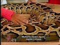 Prof  Del Nero mostra uma Python molurus para Cátia Fonseca