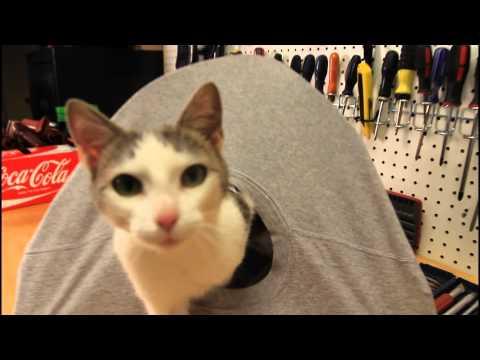 Thumbnail for Cat Video DIY Cat Tent