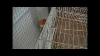 Приручение и обучение попугаев.  Фильм первый. Выбор лакомства(, 2015-04-16T20:05:31.000Z)