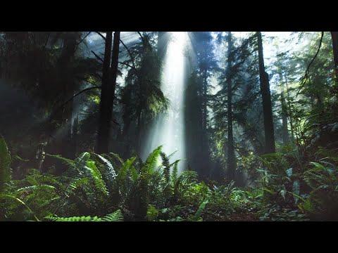 Beautiful Relaxing Music Radio 24/7: Sleep Music, Study Music, Meditation Music, Nature Videos