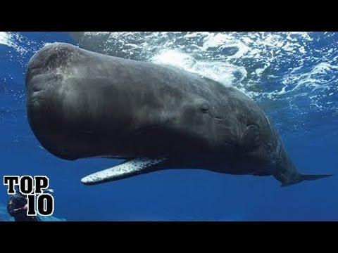 Top 10 Largest Oceans & Seas