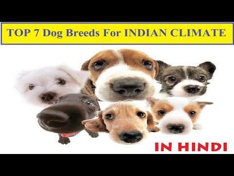 Top 7 Dog Breeds In Hindi For Indian Climate  | Dog Facts in Hindi | Animal Channel Hindi