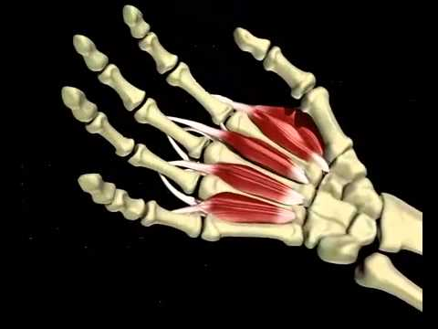 3D CGI medical video carpal tunnel syndrome Webster Clear Lake TX