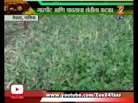 Yeola   Nashik   Farmer In Deep Problem   As Damage Of Crops In Unseasonal Heavy Rain And Hailstorm