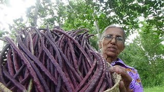 Red Long Beans Curry prepared in my Village by Grandma | Village Food