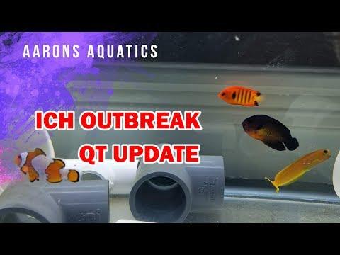 Ich! Quarantine Update - FISH CAPTURED