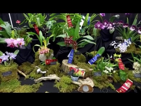 3. Orchid show OrchidFête 2016 by ECOS - Southern Ontario Orchid Society display