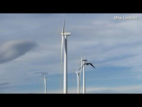 Turbine trouble: Windmills threatening Golden Eagles in American West