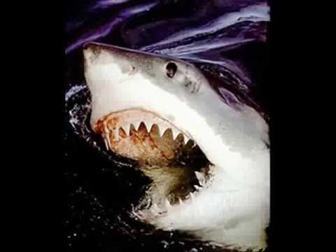 trilha sonora do filme tubarão : um classico do cinema