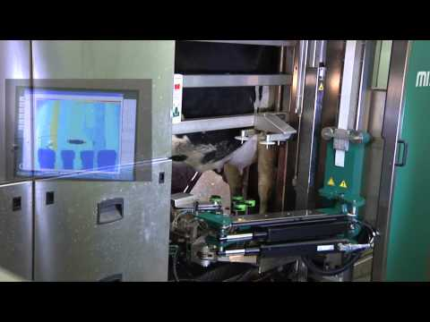 GEA Farm Technologies Automatic Milking System -- MIone
