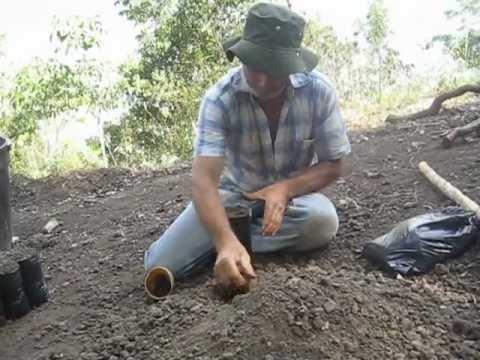 Llenando bolsas para semillero youtube - Tierra para semilleros ...