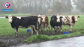 Midden-Delfland heeft de titel: Bijzonder Provinciaal Landschap