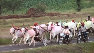 Bullock cart race at Tapakarawadi बैलगाडा शर्यत
