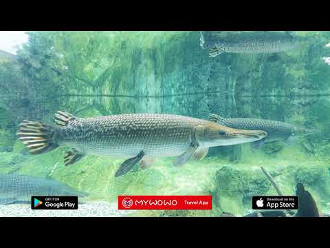 River Safari – Introduction – Singapour – Audioguide – MyWoWo Travel App