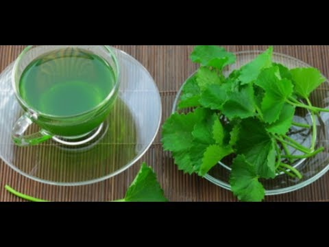diy-brain-booster-for-kids,-brahmi-leaves-tea,-memory-enhancer