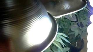 How To Make A Cfl Grow Box